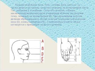 Каждая отдельная часть тела – голова, рука, кисть и т.д. – также делятся по