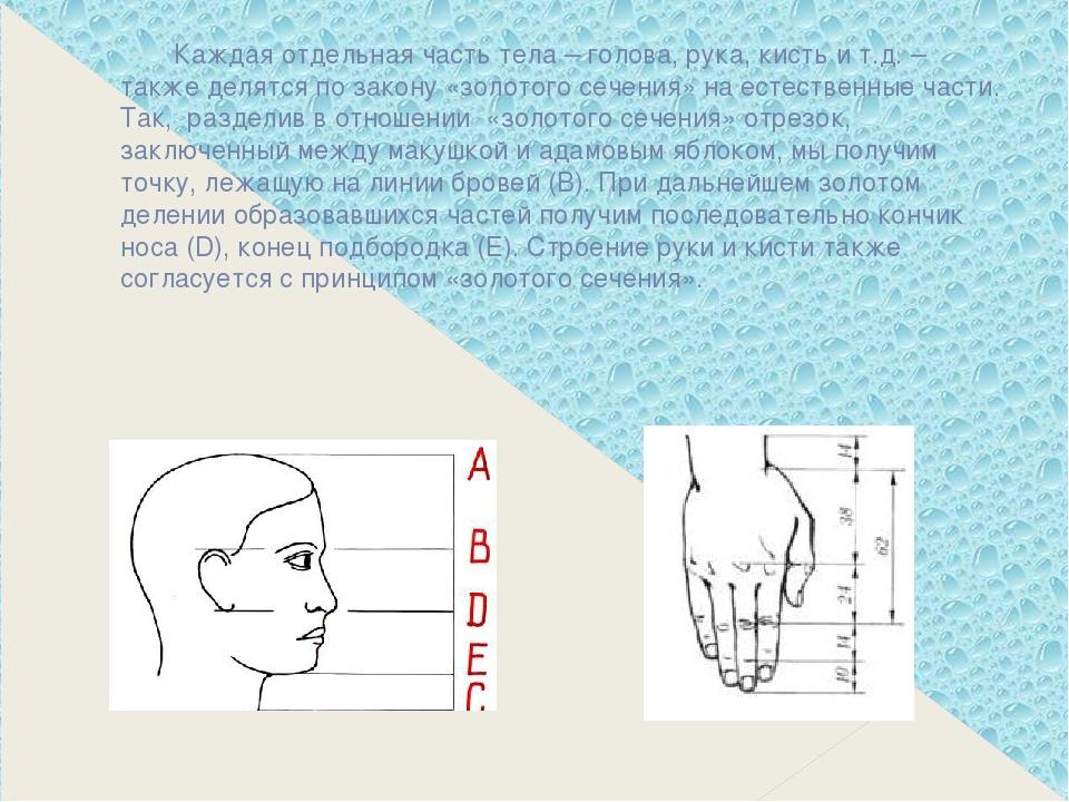 Каждая отдельная часть тела – голова, рука, кисть и т.д. – также делятся по...
