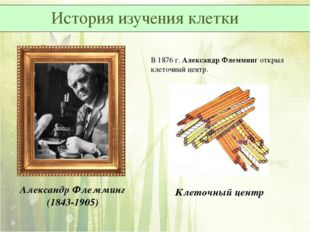 В 1876 г. Александр Флемминг открыл клеточный центр. Александр Флемминг (1843