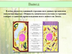Клетка является единицей строения всех живых организмов (исключая вирусы). О