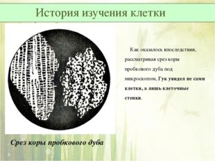 Срез коры пробкового дуба Как оказалось впоследствии, рассматривая срез коры