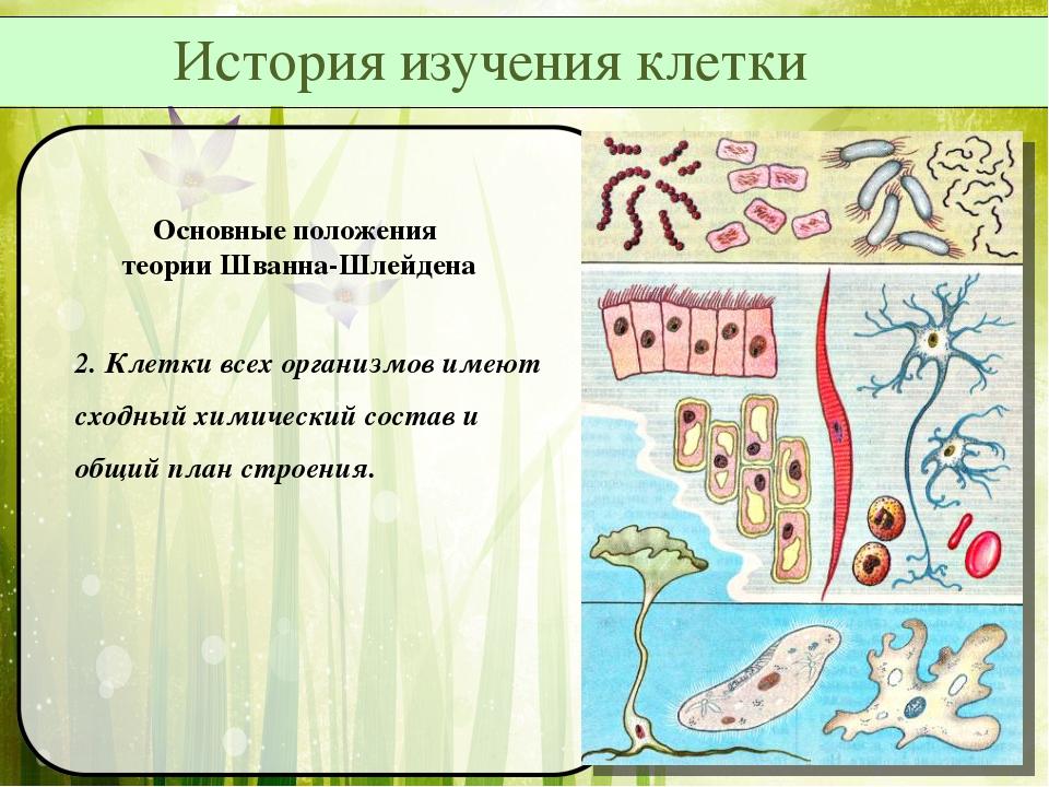 Основные положения теории Шванна-Шлейдена 2. Клетки всех организмов имеют схо...