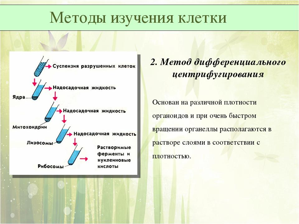 2. Метод дифференциального центрифугирования Основан на различной плотности о...