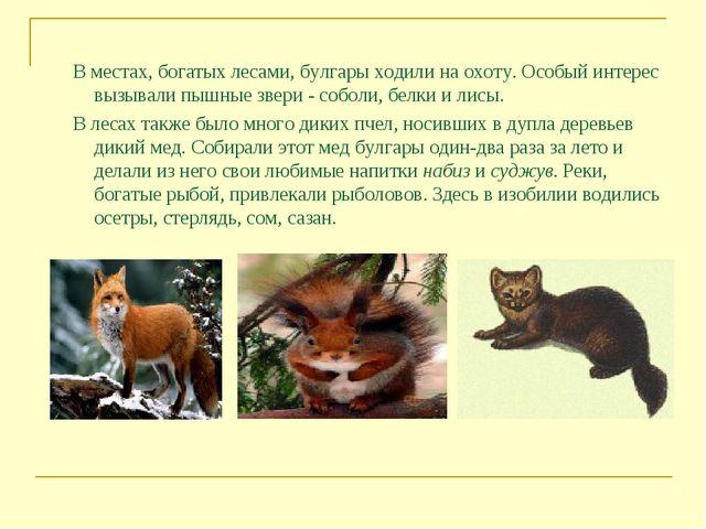 В местах, богатых лесами, булгары ходили на охоту. Особый интерес вызывали п...