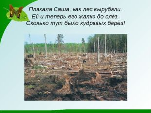 Плакала Саша, как лес вырубали. Ей и теперь его жалко до слёз. Сколько тут бы