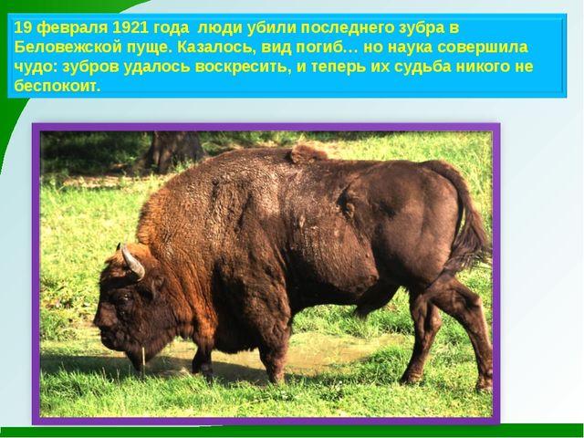 19 февраля 1921 года люди убили последнего зубра в Беловежской пуще. Казалось...