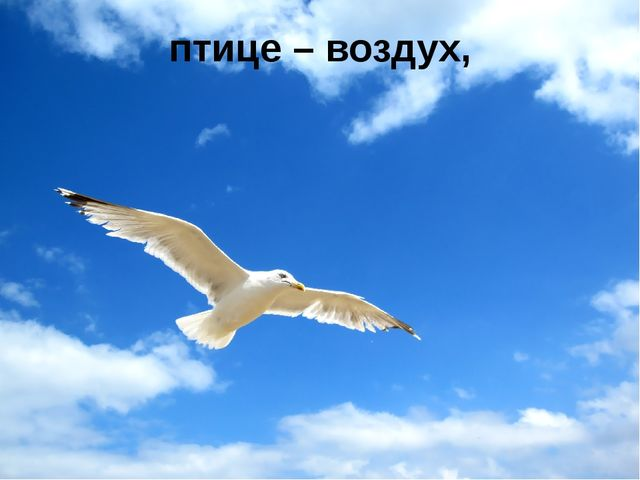 птице – воздух,