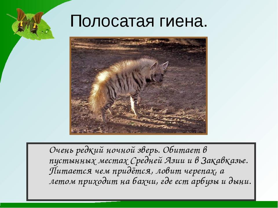 Очень редкий ночной зверь. Обитает в пустынных местах Средней Азии и в Закав...