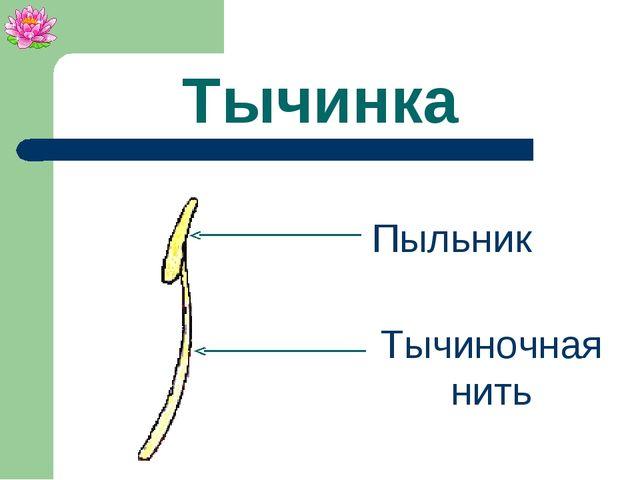 Тычинка Пыльник Тычиночная нить