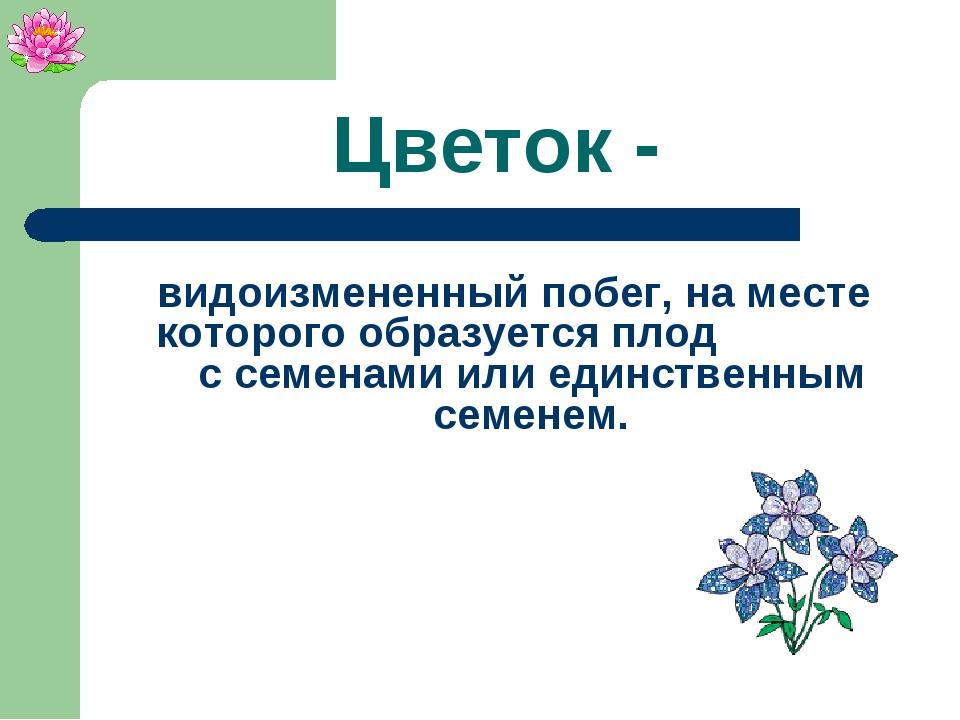 Цветок - видоизмененный побег, на месте которого образуется плод с семенами и...