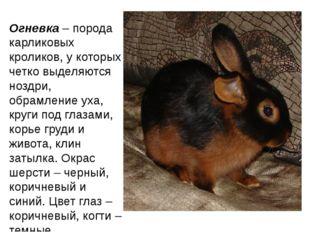 Огневка– порода карликовых кроликов, у которых четко выделяются ноздри, обра
