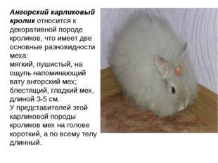 Ангорский карликовый кроликотносится к декоративной породе кроликов, что име