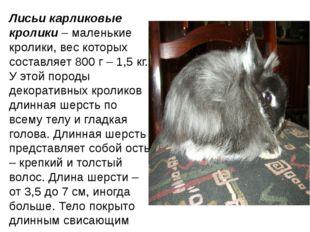 Лисьи карликовые кролики– маленькие кролики, вес которых составляет 800 г –