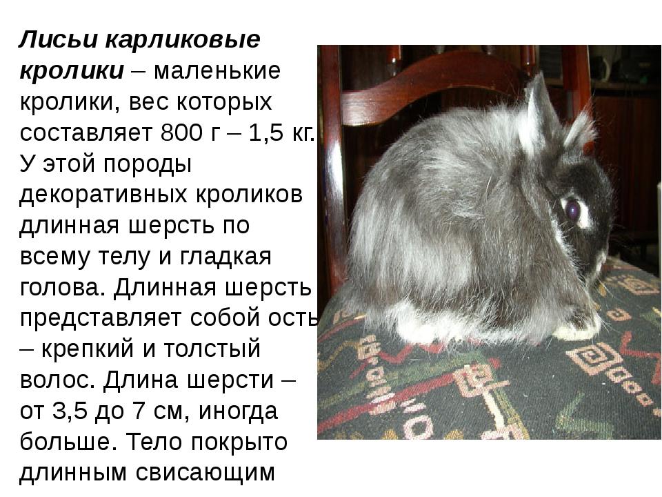 Лисьи карликовые кролики– маленькие кролики, вес которых составляет 800 г –...