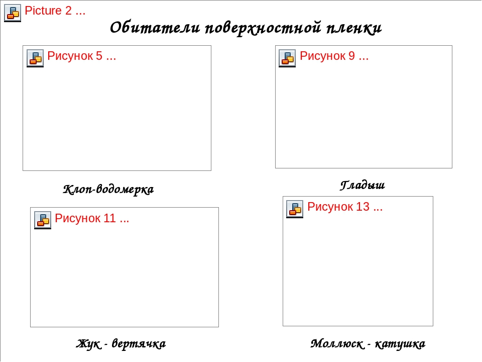 Обитатели поверхностной пленки Клоп-водомерка Гладыш Жук - вертячка Моллюск -...