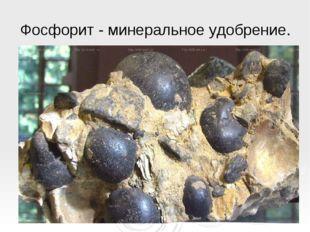 Фосфорит- минеральное удобрение.