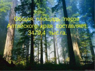 Общая площадь лесов Алтайского края составляет 3479,4 тыс.га.