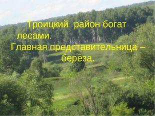 Троицкий район богат лесами. Главная представительница – берёза.