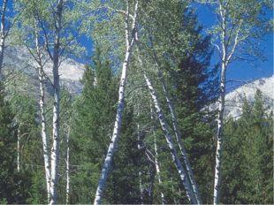Леса занимают около 1/3 суши. На планете 30% хвойных и ___лиственных лесов.