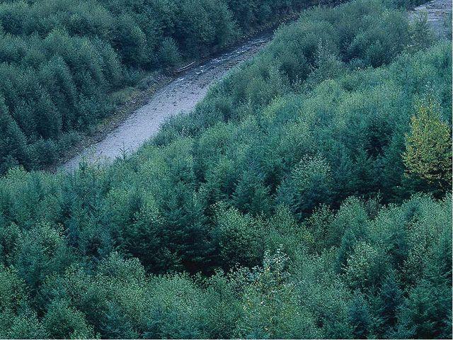 Лес очищает воздух, создаёт места обитания животных, защищает почву от эрози...