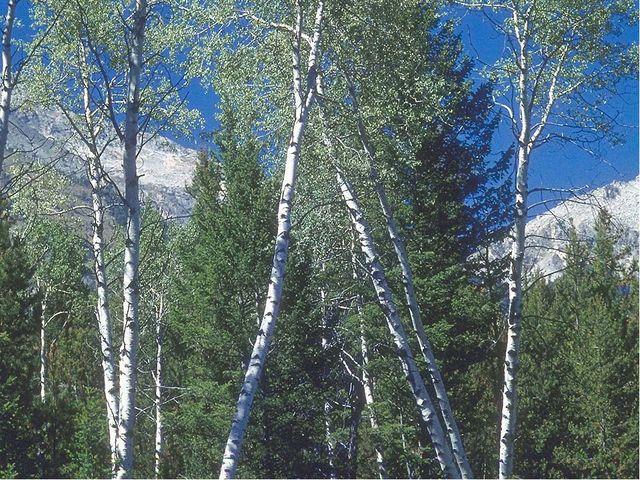 Леса занимают около 1/3 суши. На планете 30% хвойных и ___лиственных лесов....