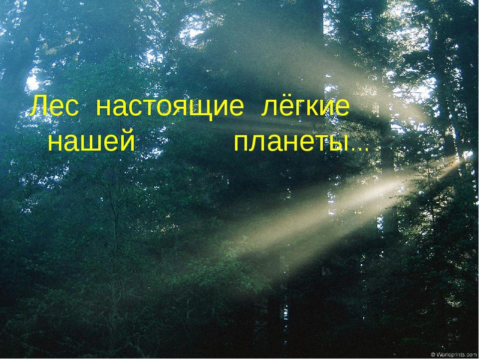 Лес настоящие лёгкие нашей планеты…
