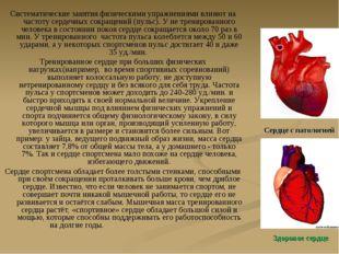 Систематические занятия физическими упражнениями влияют на частоту сердечных