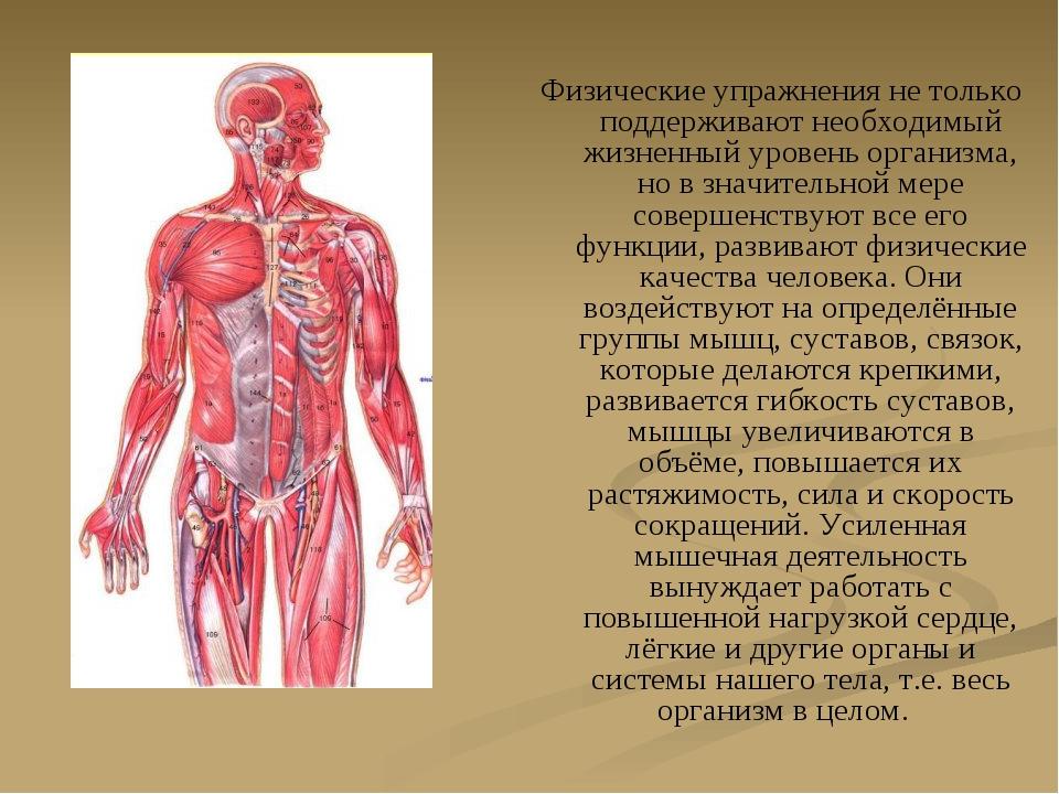 Физические упражнения не только поддерживают необходимый жизненный уровень ор...
