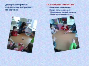 Дети рассматривают Пальчиковая гимнастика как растение прорастает Я фасоль в