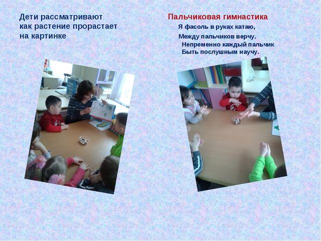 Дети рассматривают Пальчиковая гимнастика как растение прорастает Я фасоль в...