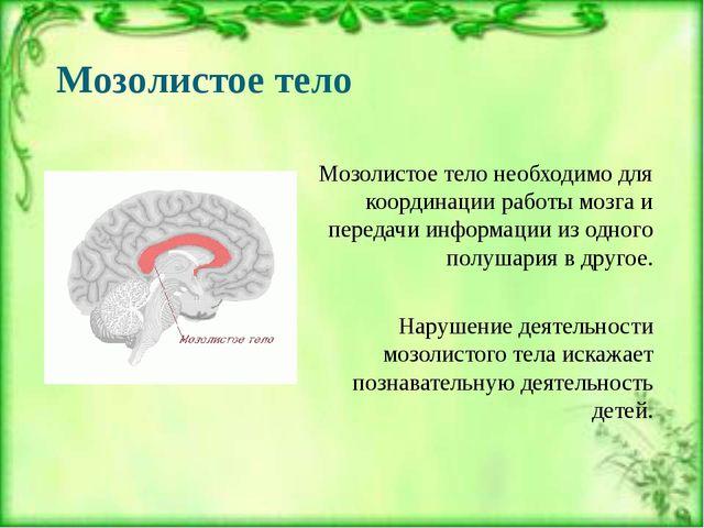 Мозолистое тело Мозолистое тело необходимо для координации работы мозга и пер...