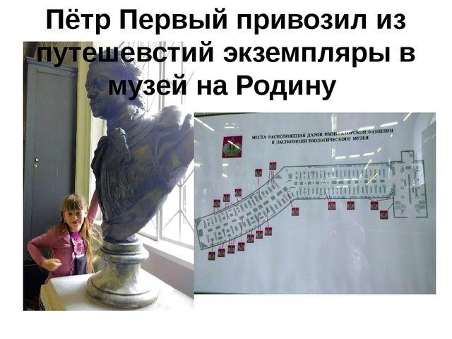Пётр Первый привозил из путешевстий экземпляры в музей на Родину