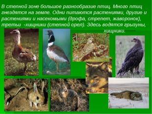В степной зоне большое разнообразие птиц. Много птиц гнездятся на земле. Одни