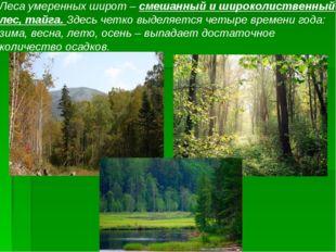 Леса умеренных широт – смешанный и широколиственный лес, тайга. Здесь четко в