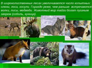 В широколиственных лесах увеличивается число копытных: олени, лоси, косули. Г