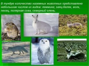В тундре количество наземных животных представлено небольшим числом их видов: