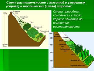 5000 – Смена растительности с высотой в умеренных (справа) и тропических (сле