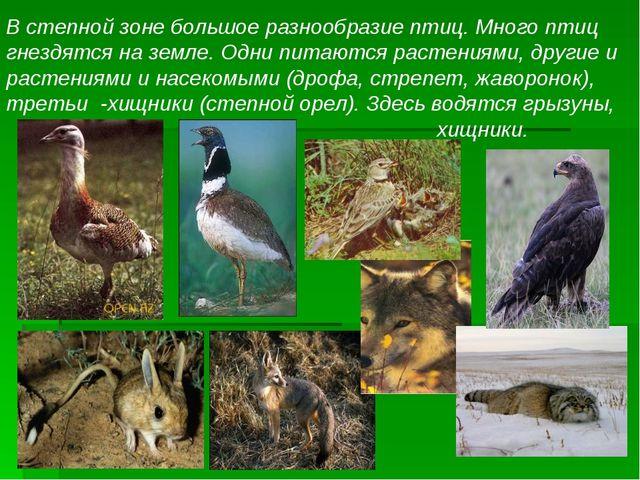 В степной зоне большое разнообразие птиц. Много птиц гнездятся на земле. Одни...