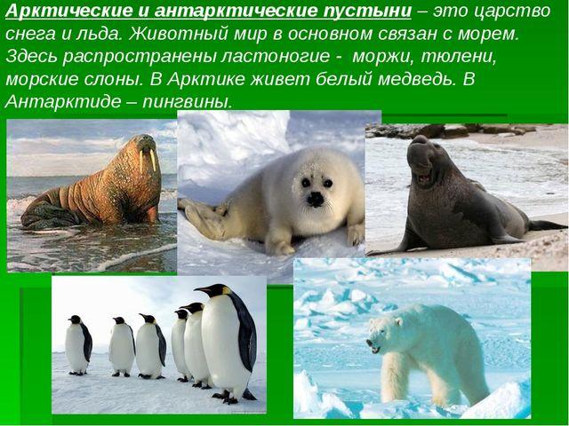 Арктические и антарктические пустыни – это царство снега и льда. Животный мир...
