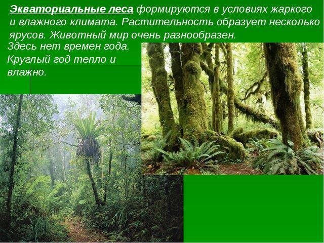 Экваториальные леса формируются в условиях жаркого и влажного климата. Растит...