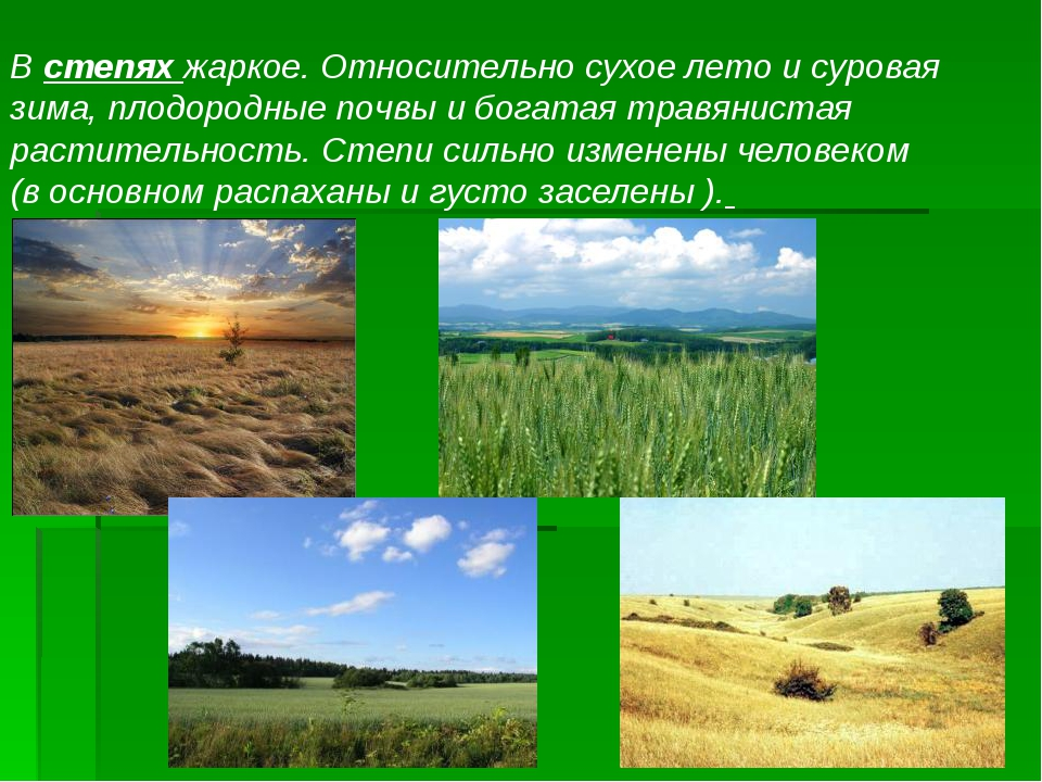 В степях жаркое. Относительно сухое лето и суровая зима, плодородные почвы и...