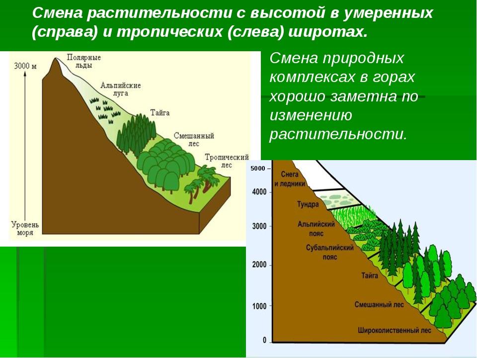 5000 – Смена растительности с высотой в умеренных (справа) и тропических (сле...