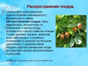 Распространение плодов. Необычайно разнообразные приспособления наблюдаются у