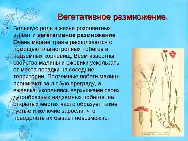 Вегетативное размножение. Большую роль в жизни розоцветных играет и вегетатив...