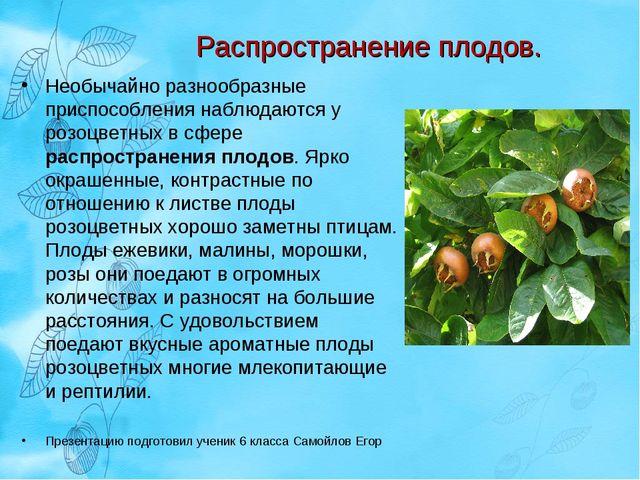Распространение плодов. Необычайно разнообразные приспособления наблюдаются у...