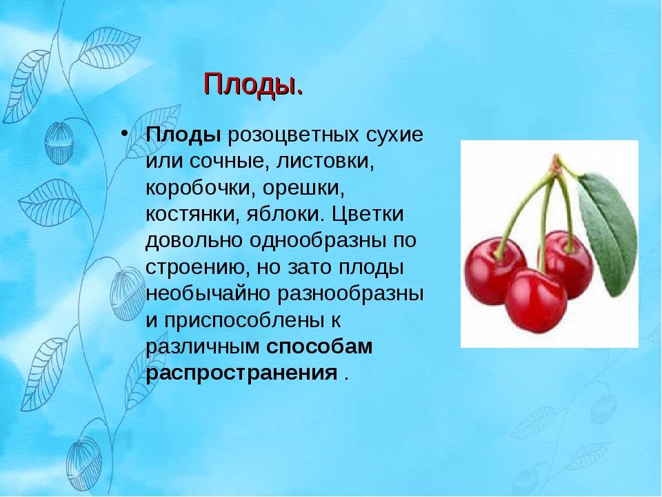 Плоды розоцветных сухие или сочные, листовки, коробочки, орешки, костянки, яб...