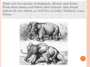 There are two species of elephants, African and Asian. From their names and f