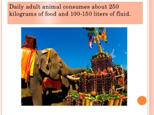 Daily adult animal consumes about 250 kilograms of food and 100-150 liters of