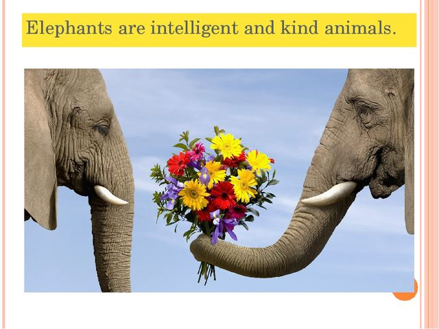 Elephants are intelligent and kind animals.