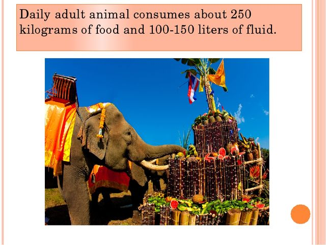 Daily adult animal consumes about 250 kilograms of food and 100-150 liters of...